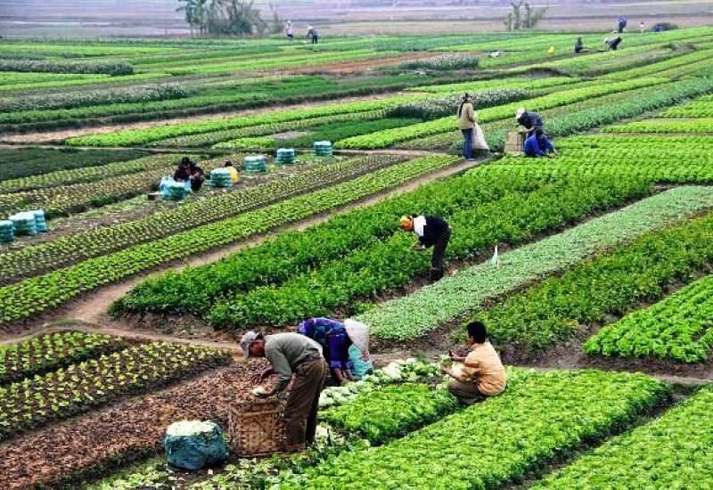 سبزی کاری با فاضلاب در «چاه بردی» کهگیلویه / سلامت مردم تهدید میشود