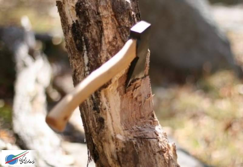 رأی جالب دادگاه برای عامل قطع درختان «بهمئی»