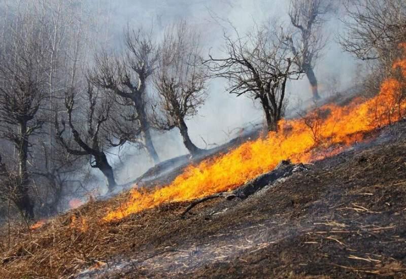 آتشسوزی گسترده در جنگلهای کوه سفید کهگیلویه و بویراحمد - <a href='https://www.kebnanews.ir' target='_blank'>کبنا نیوز</a>